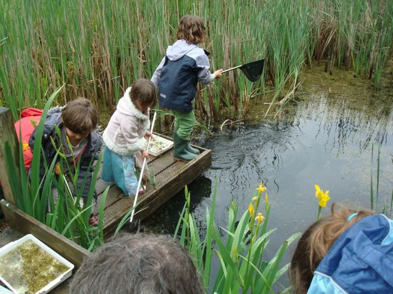 In 2001, a platform is installed for school pond-dipping groups